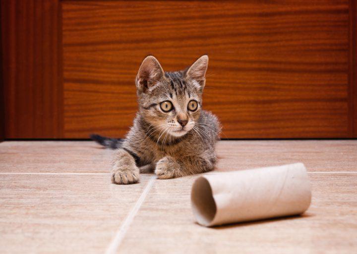 Cómo jugar con un gato