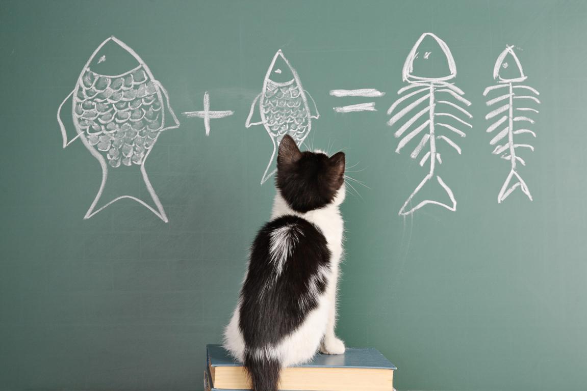 Cómo educar un gato