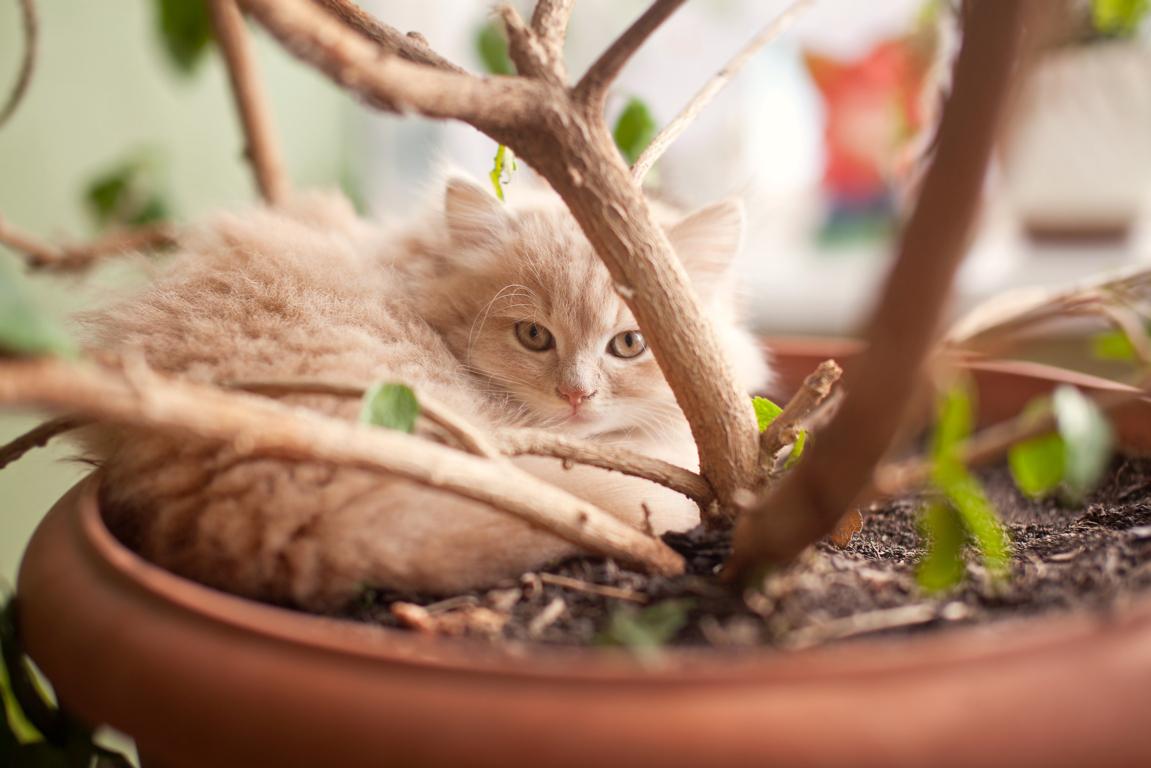 cómo cuidar un gato