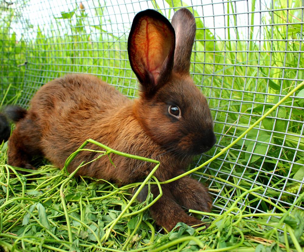 parque metálico para conejos