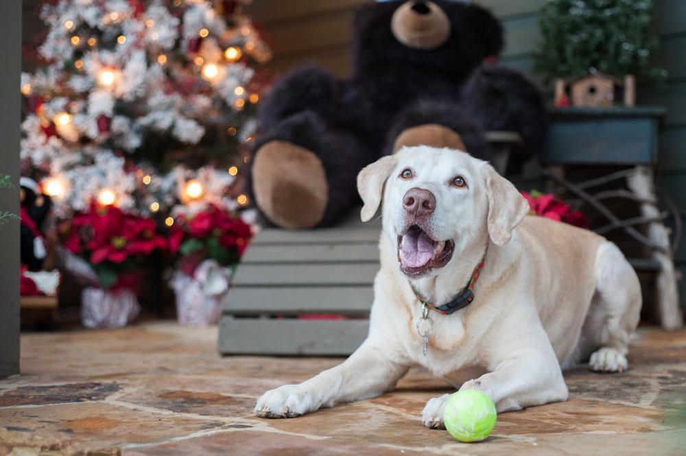 regalos para perros