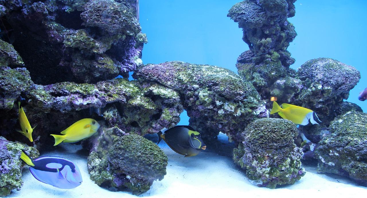 Tipos de peces limpiadores