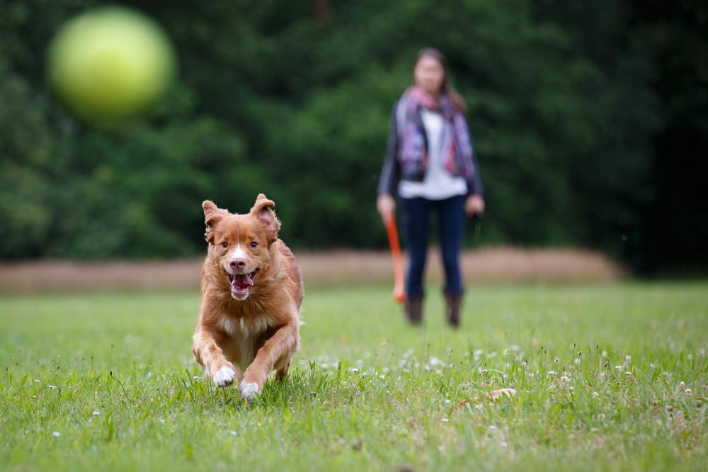 juguetes naturales para perros