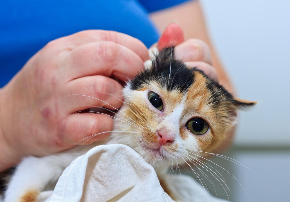 higiene en perros y gatos