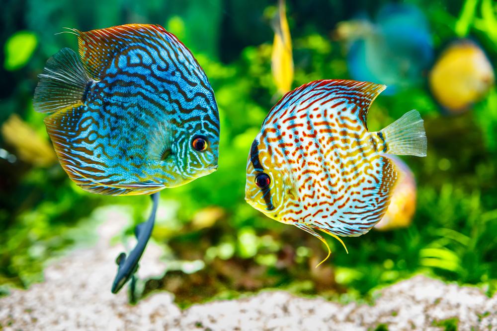 Tipos de peces tropicales