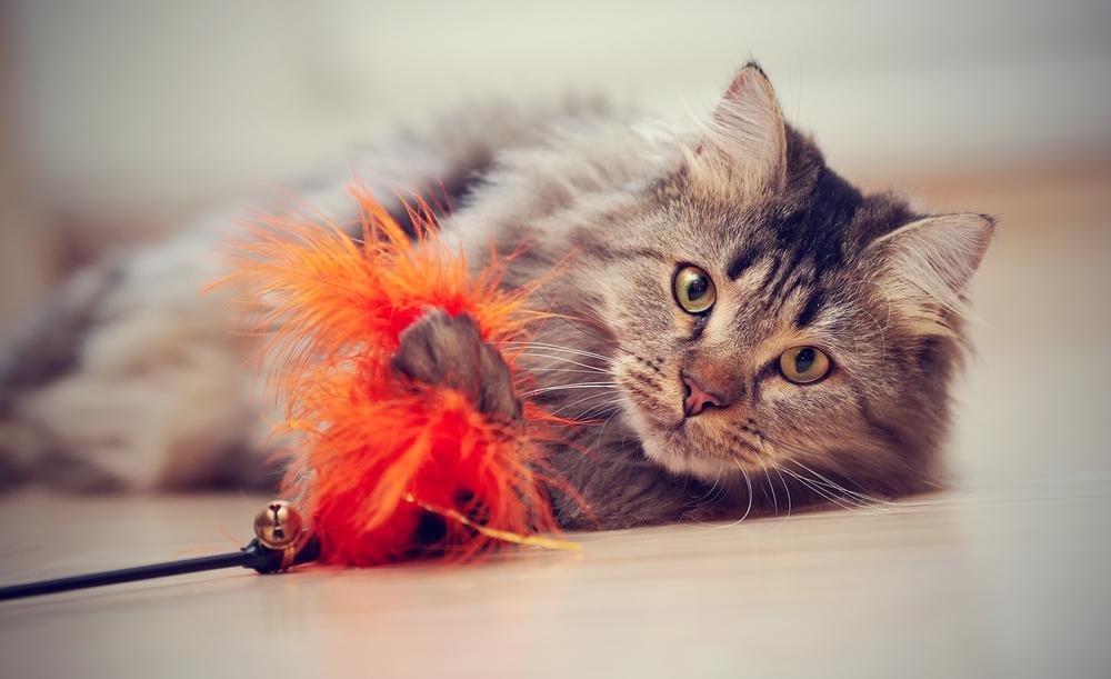 raza de gato más juguetona