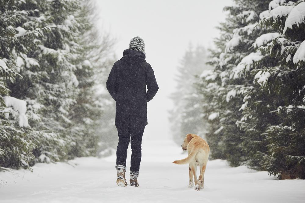 Los cuidados de un Labrador