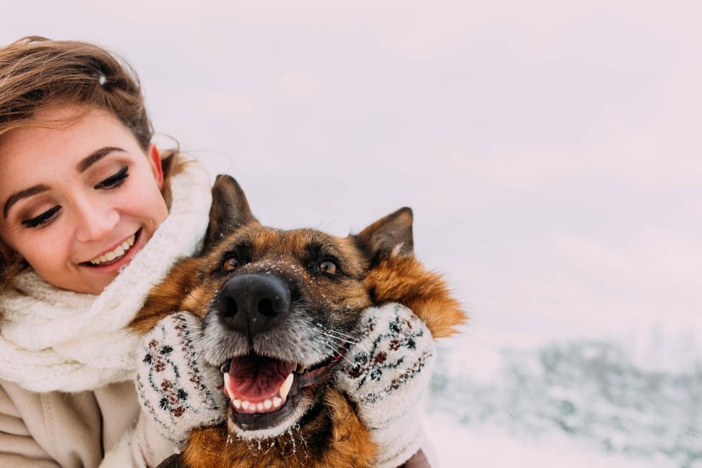 Razas de perros que mejor aguantan el frío