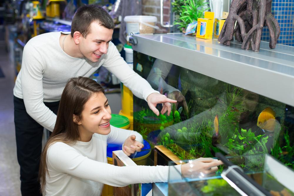 Cómo cuidar un pez