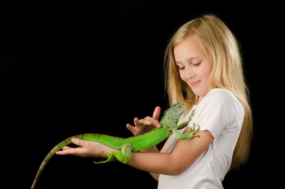 Cómo alimentar una iguana bebé
