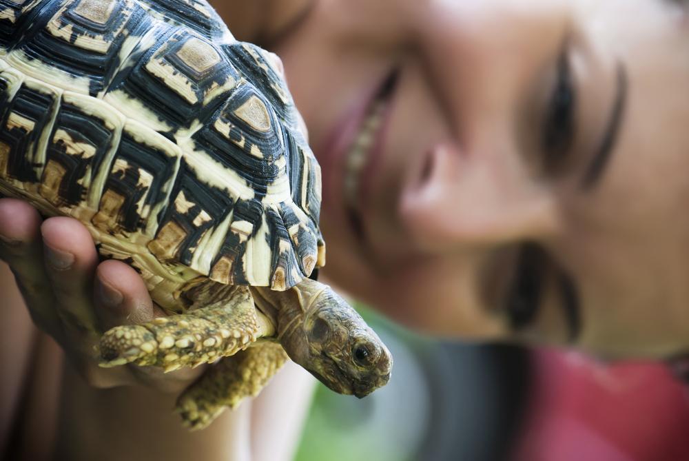 terrario para tortuga de tierra