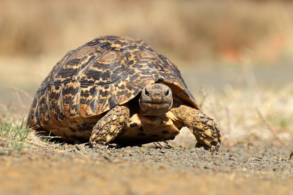 Cada cuánto limpiar el terrario de una tortuga