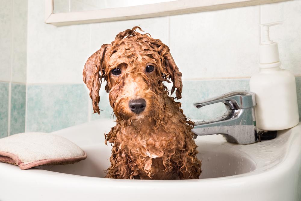 Cómo bañar a un cachorro