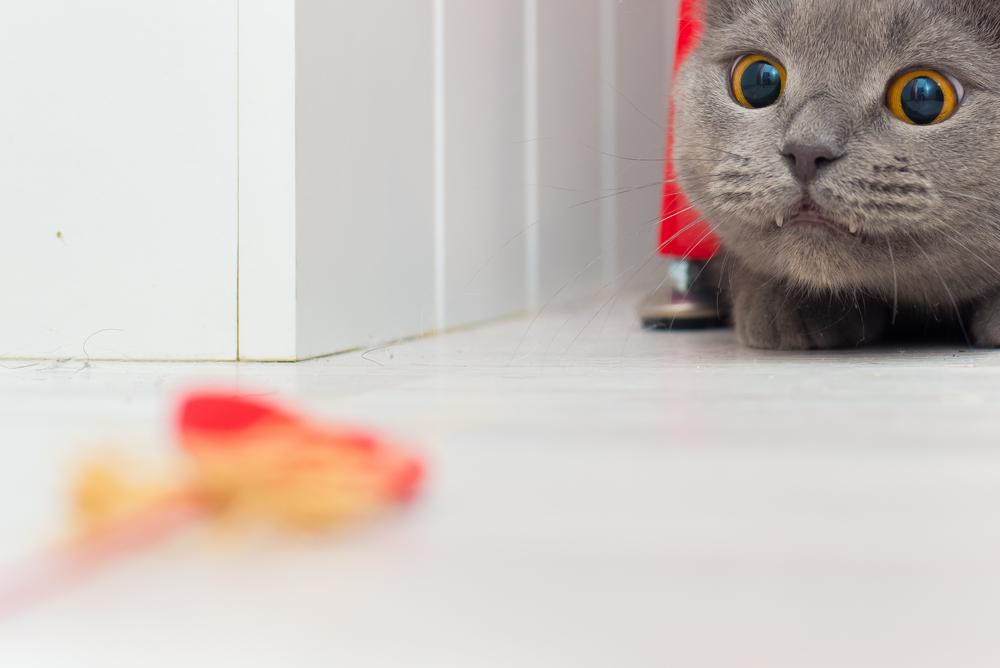 Cómo estimular los instintos de un gato