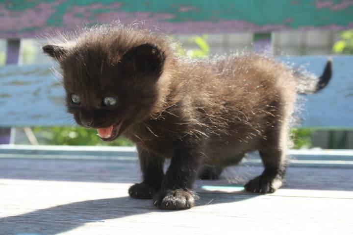 gato recién nacido