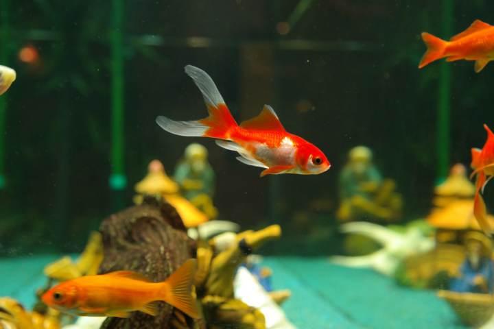 caracteristicas de los peces de agua dulce
