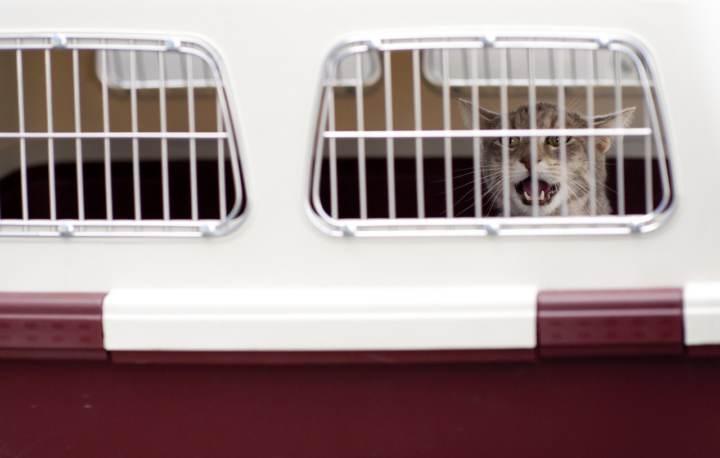 tipos de transportines para gatos