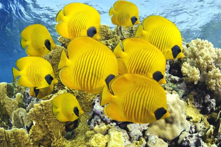 cómo alimentar peces de acuario