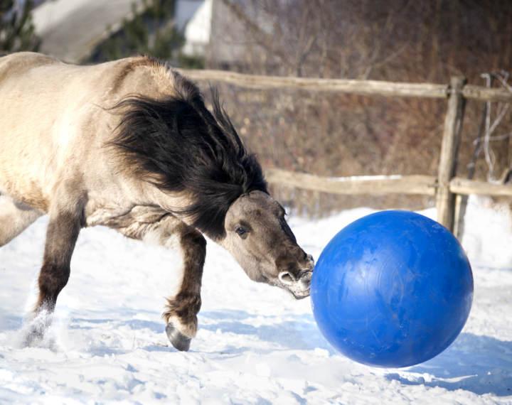 beneficios de las pelotas para caballos