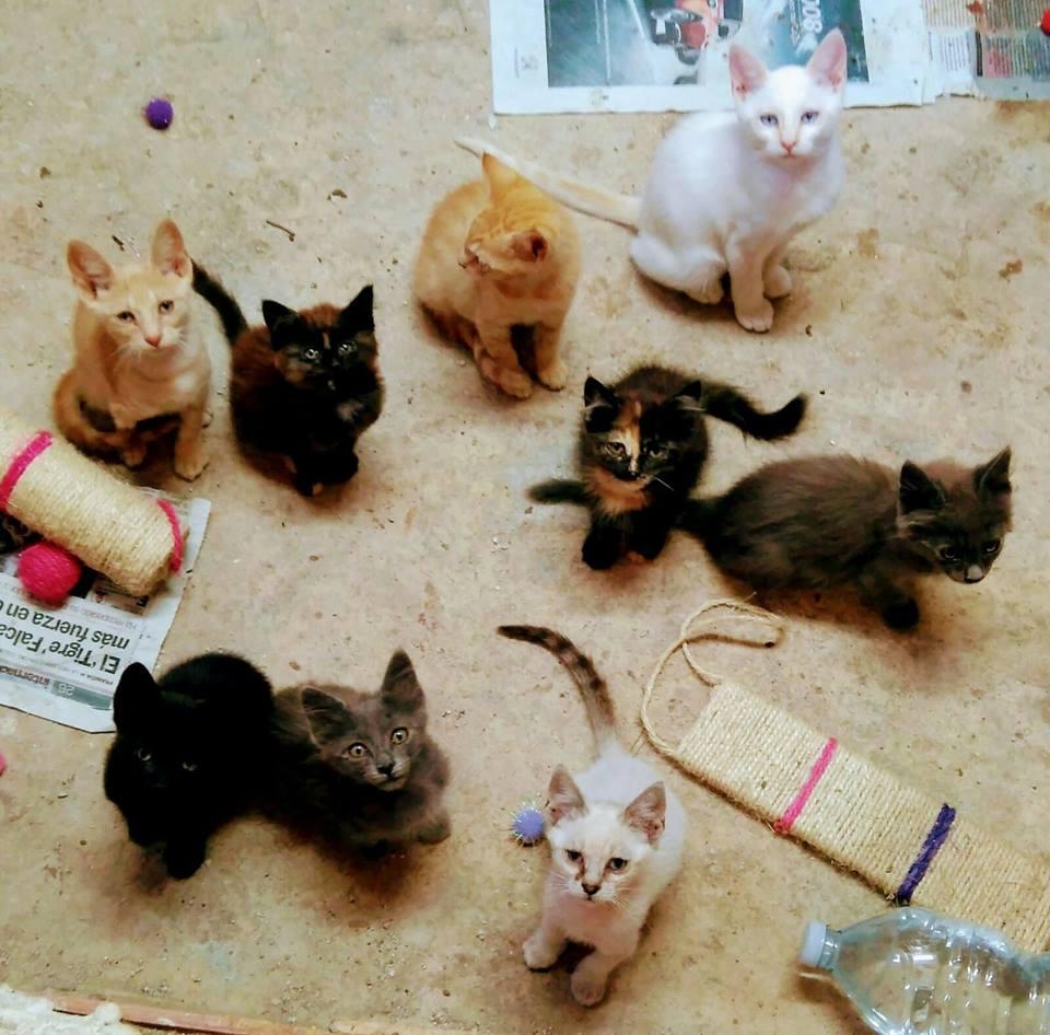 Donación de pienso a Gatos Protectora Badagats
