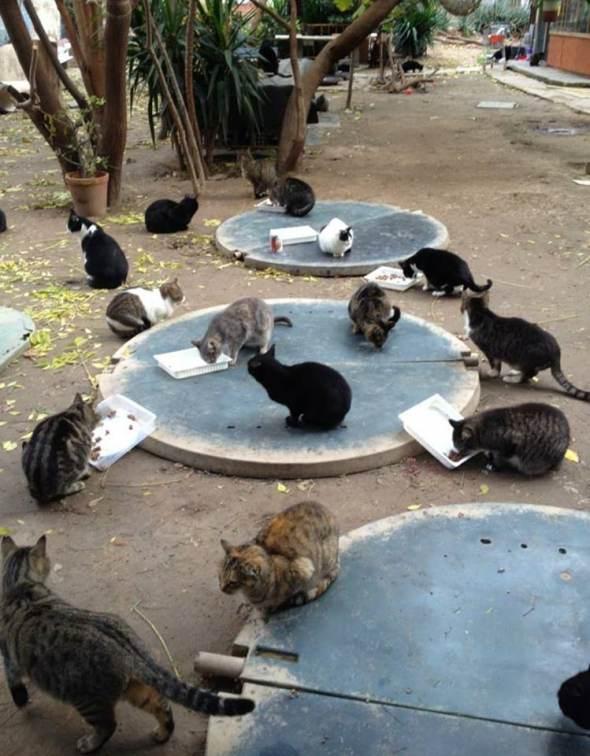 Gatos Protectora Badagats