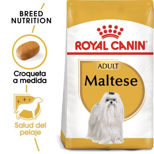 Maltes Adult Food Breed