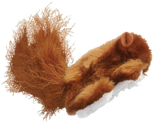Dr.Noys Cat Squirrel