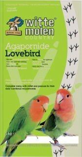 Country Lovebird