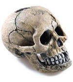 Crâne effrayant 105 mm Classic For Pets