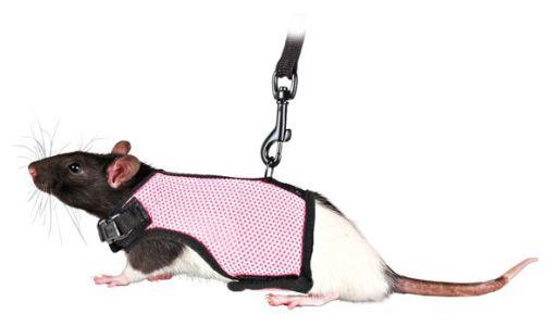 Set Rongeurs/Rats 12-18 cm Trixie