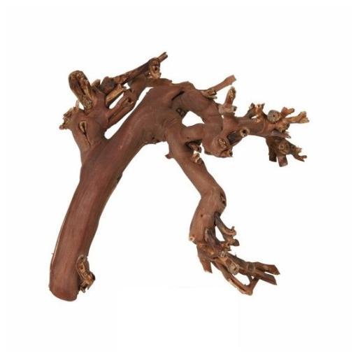 10 Ceps vides décapées avec sable 45-70 cm Trixie