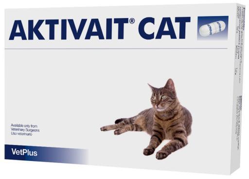 Aktivait für die Gehirnfunktion bei Älteren Katzen