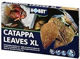Feuilles de Catappa Xl 12 Pièces XL Hobby