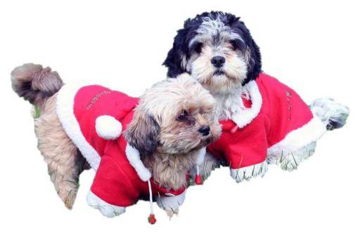qhp-manteau-chien-christmas-rouge-30cm