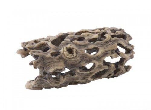 Skelett Des Cholla-Kaktus