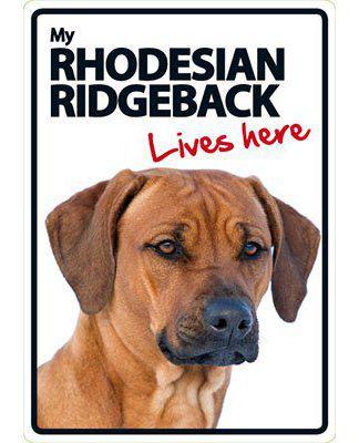 Mon signal de Rhodesian Ridgeback A5 Lives Here 100 gr Magnet & Steel