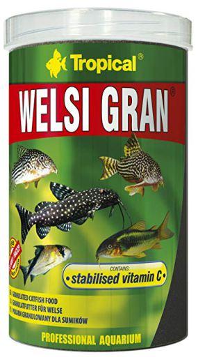 60466 Welsi Gran 650 GR Tropical