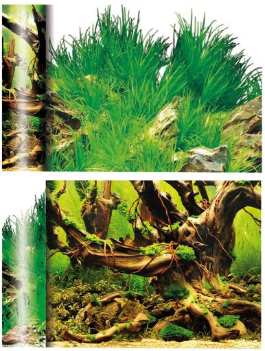 Fonds Mangrove / Laguna Blanca 470 GR Ica