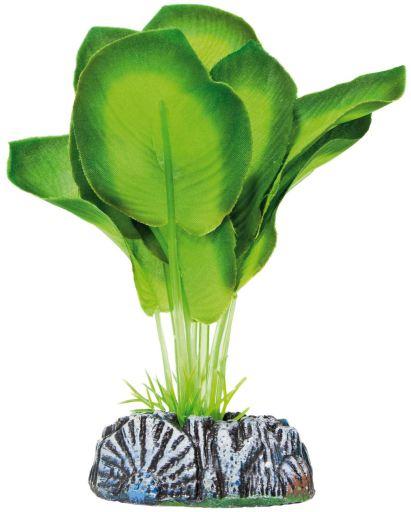 Plante de Soie Aglaonema 60 GR Aquatic Plants