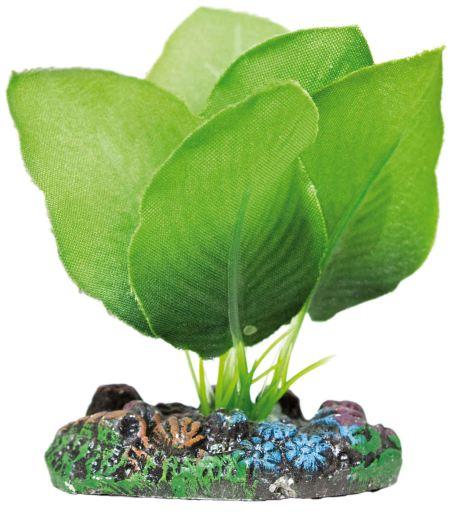Planta de Seda Anubias