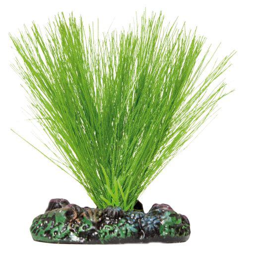 Plante en Soie Miriophyllum S 2 KG Aquatic Plants