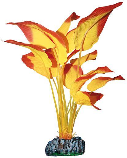 Anubias 9 KG Aquatic Plants