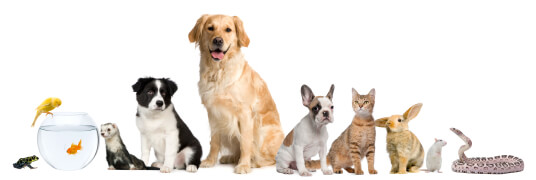 Introduce us your pet and get 5% discount on your purchase now!
